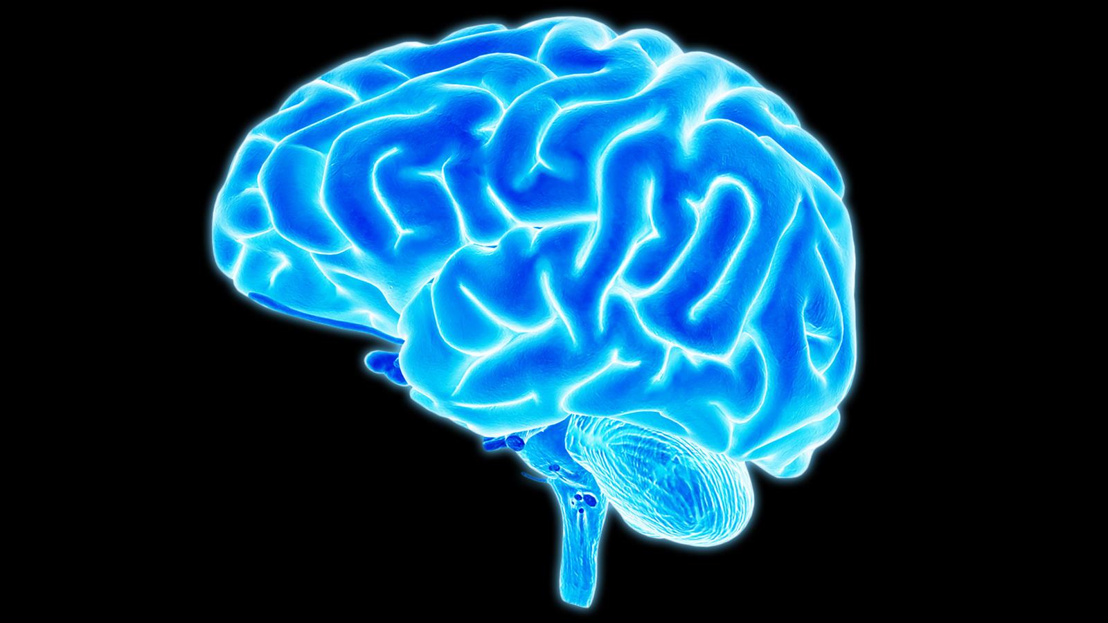 Baik Untuk Kesehatan Sel-Sel Otak
