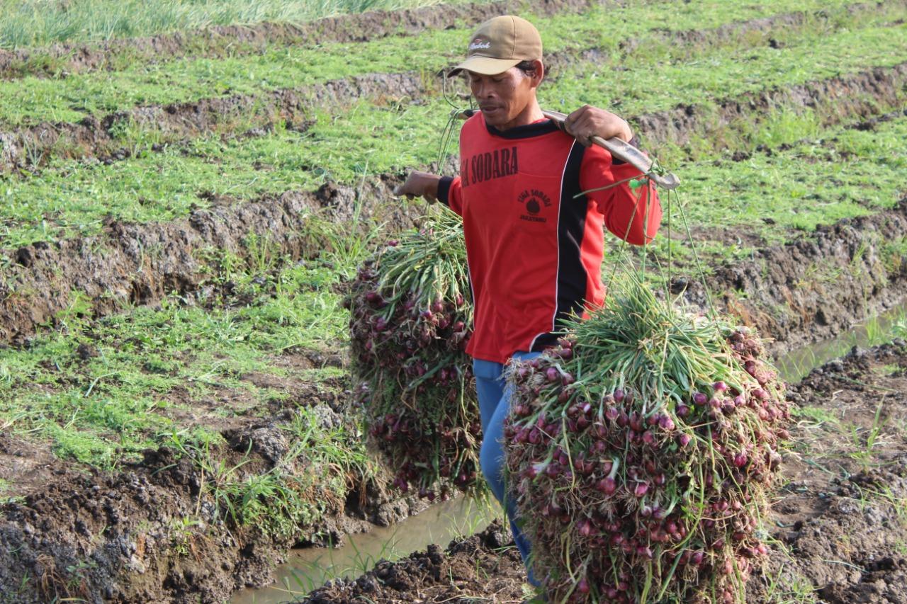 Daerah Penghasil Komoditas Pertanian Dan Perkebunan