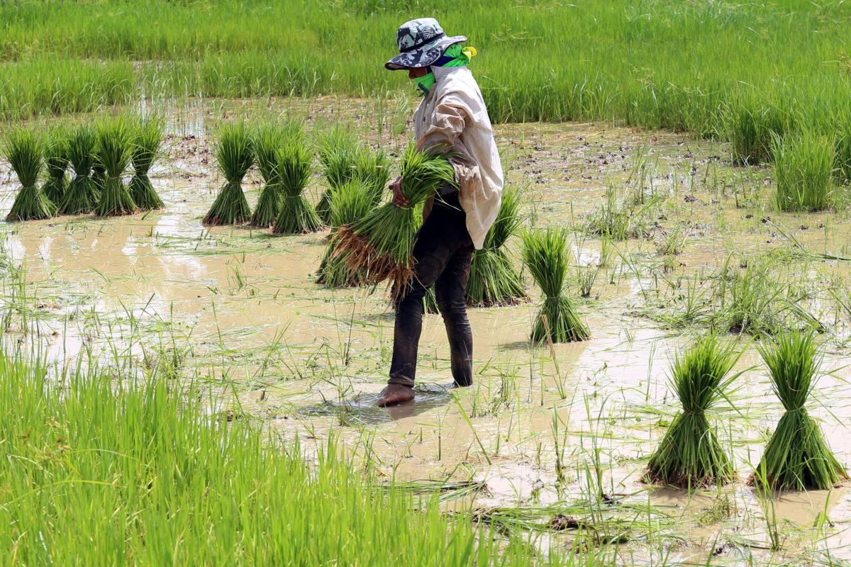 Persebaran Pertanian DI Indonesia Yang Belum Anda Ketahui