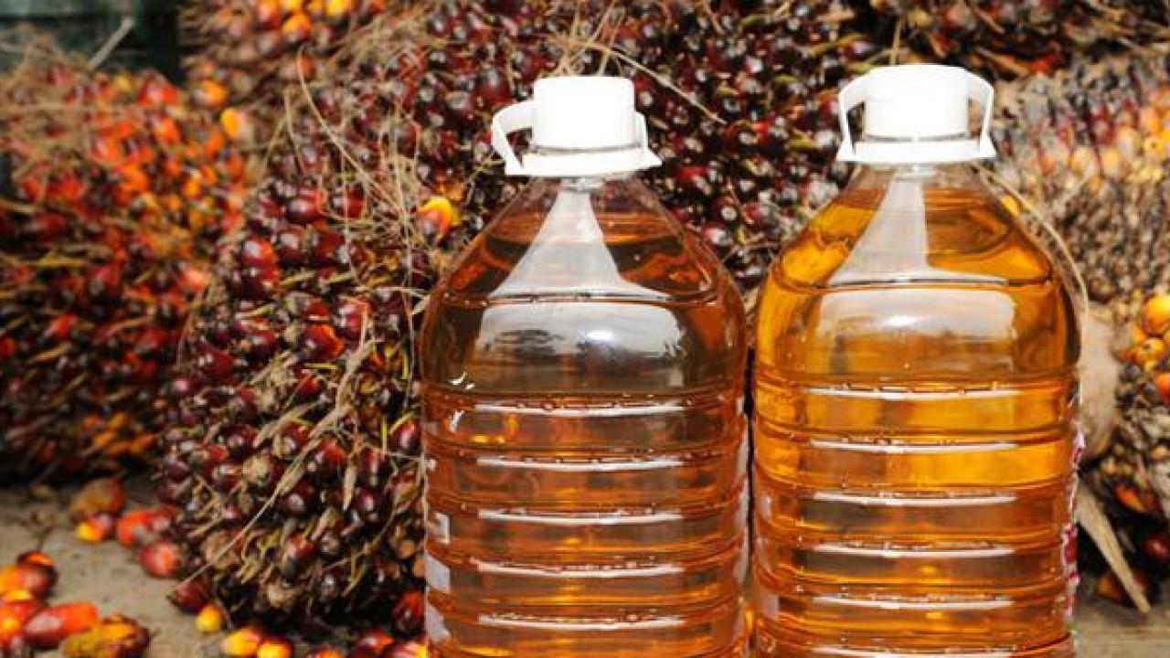 manfaat minyak goreng dari kelapa sawit