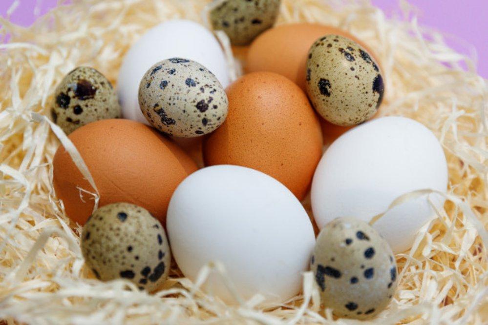 Jenis-Jenis Telur